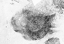 Fingerprints lifted with black gellifter and scanned (GLScan) and mirror imaged (negative)