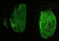 Fluorescence of Acid Yellow 7 stained fingerprints in blood.