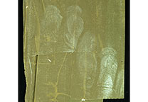 Several fingerprints on layered brown packing tape removed from carton with Turkish solvent and then developed with White Powder White.