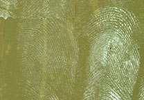 More detailed view of  fingerprints on layers of brown packing tape removed from carton with Turkish solvent and then developed with Wet Powder White.