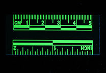 Green, fluorescent ruler, fluorescing (UV light, 455 nm filter), 5 cm
